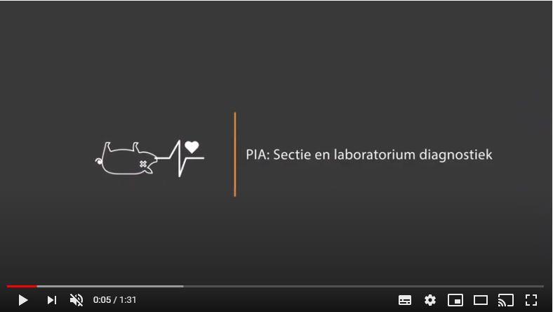 video 1 MSD Animal Health