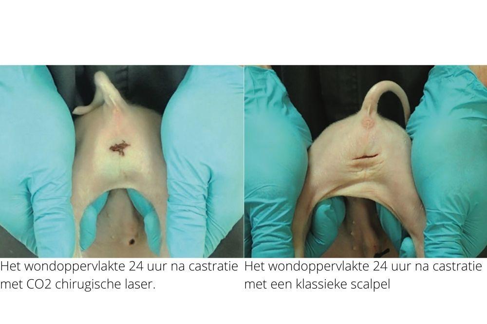CO2 chirurgische laser voor castratie onderzocht