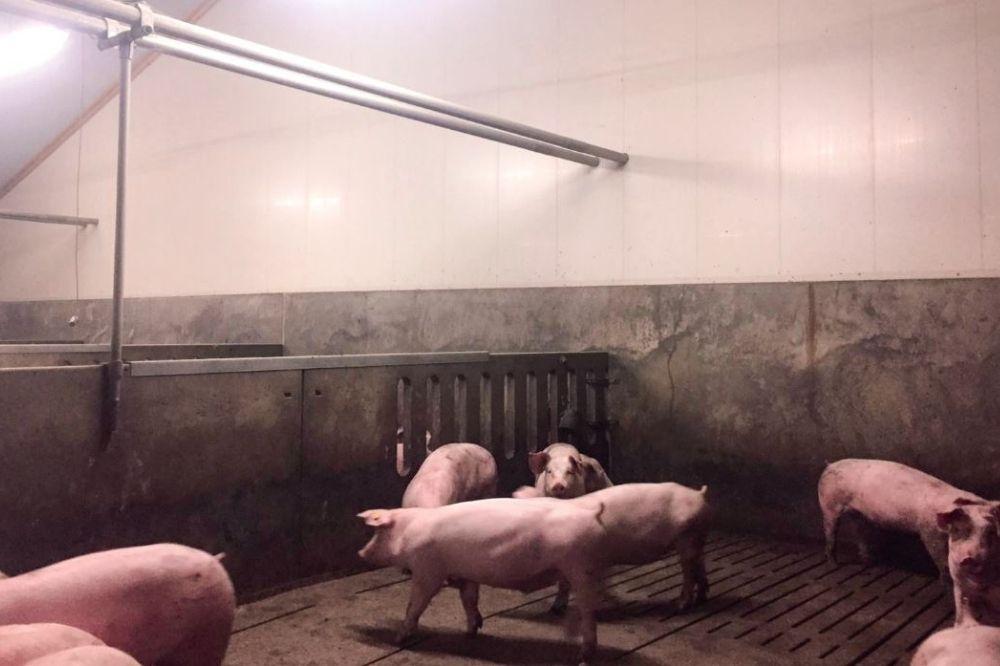 """""""Een beter klimaat is bevorderlijk voor varkens en boer"""""""