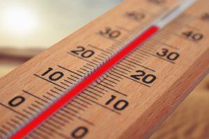 Hittestress leidt tot minder worpen en minder biggen