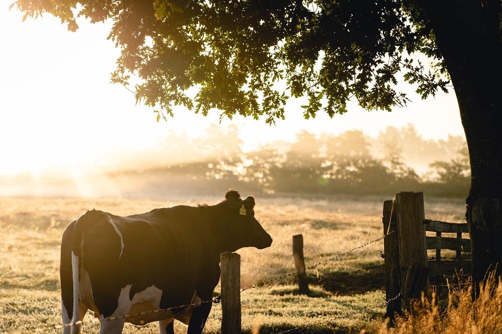 NRC: Miljarden voor uitkoop van honderden agrariërs