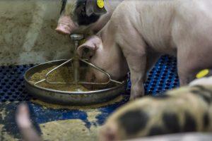 Duitse export van diervoederadditieven stijgt, Nederland belangrijkste bestemming